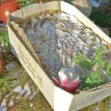 Rillettes de Tours en barqueta de madera